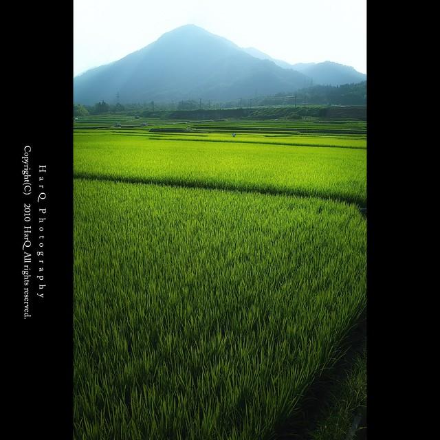 Green *