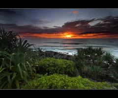 Pandanus in Paradise (danishpm) Tags: orange seascape clouds sunrise canon rocks australia wideangle nsw aussie aus 1020mm manfrotto goldenglow sigmalens cabarita northernnsw eos450d pandanustrees 450d cabaritabeach tweedshire sorenmartensen hitechgradfilters 09ndreversegradfilter