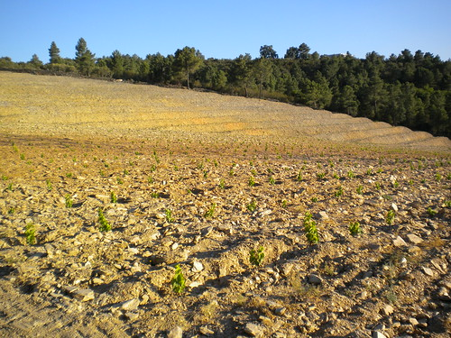 White grapes plantation in Quinta da Trovisca