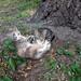 Chernobyl Kittens