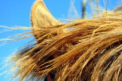 (Hysazu) Tags: horse nikon equine equus d90