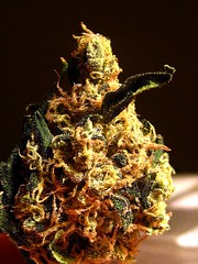 smkn420love has added a photo to the pool:sour band (headband x sour d)