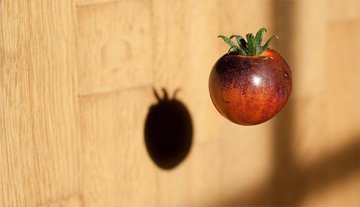 blueberry tomato, de ondergang