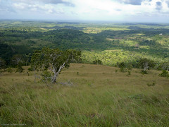 Landscapes in Shimba Hills