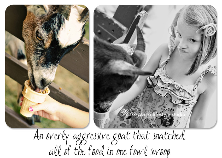 feeding the goat Collage blog WM2