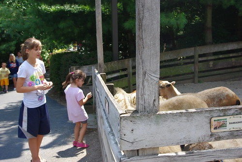Izzy and Rosie feed goats at the zoo