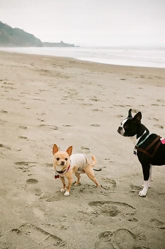 beach dogs- stinson beach 2