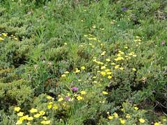 Flowers on upper Tubal Cain trail.