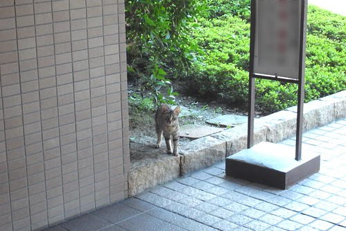 Today's Cat@2010-07-21