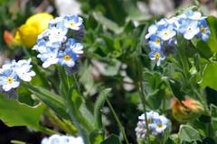 wildflowers 130