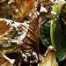 Dry Leaves - Lili Aviles