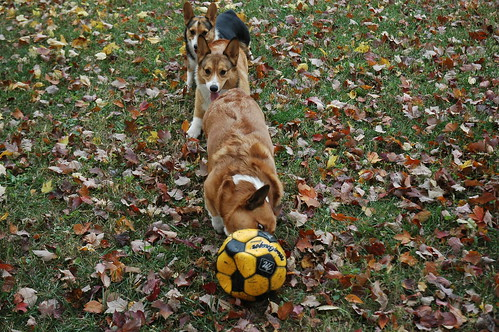 lined up for soccer