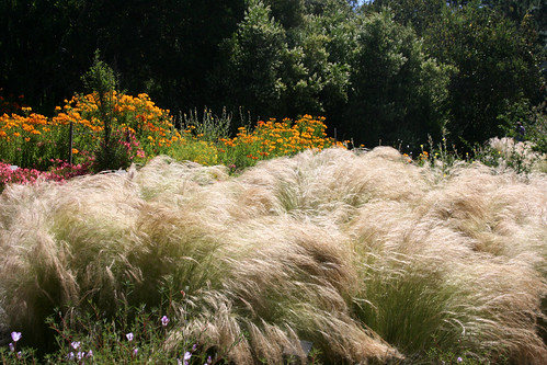 stipa and alstroemeria