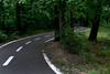 winding road (ion-bogdan dumitrescu) Tags: road park trees green bike forest dark path romania winding sibiu bitzi ibdp mg4188 ibdpro wwwibdpro ionbogdandumitrescuphotography