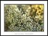 En el jardin de las delicias (Jose Luis Mieza Photography) Tags: flowers flores flower fleur fleurs flor benquerencia florews reinante jlmieza reinanteelpintordefuego joseluismieza