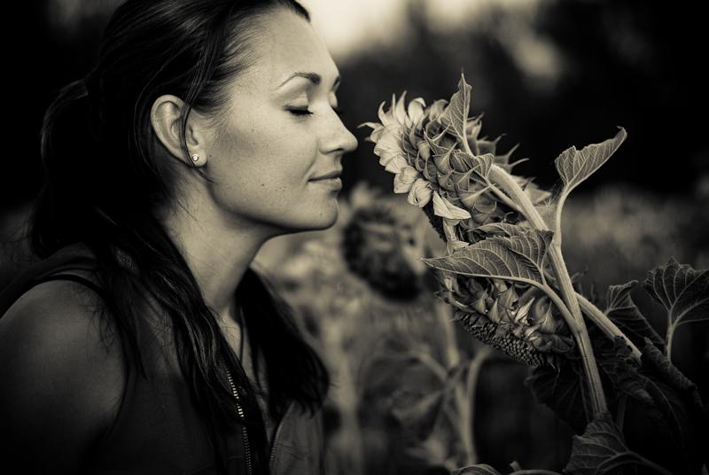 In the sunflower field #8