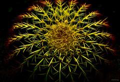 Naturalistic Art (-clicking-) Tags: lighting light cactus abstract macro art nature blackbackground danger contrast dangerous dof natural thorn naturalistic mygearandmepremium mygearandmebronze