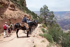 baudchon-baluchon-grand-canyon-6358240710