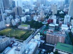 Tokyo 2010 - 芝公園 - 東京タワー(7)