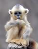 Golden monkey (floridapfe) Tags: baby cute animal zoo monkey golden korea monkeys everland 에버랜드 goldenmonkey naturesfinest floridapfe naturesgreenpeace