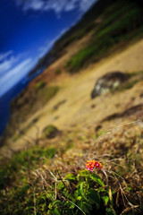 Landscape Near Nakalele Blowhole (Shannon Cayze) Tags: ocean water hawaii maui shannon 5d canon5d canonef2470mmf28lusm circularpolarizer nakalele kahekili nakaleleblowhole 2470mm kahekilihighway bwcircularpolarizer cayze 5dmarkii canon5dmarkii shannoncayze