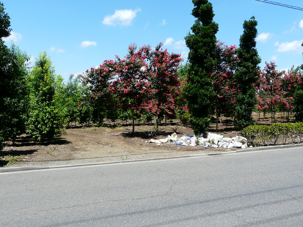 Tree as Dump