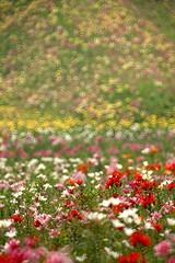 Millions Of Colors (kobaken++) Tags: summer mountain flower color nature field canon lens eos mirror bokeh ken f45 mc donut 5d hunter 300 500 f56 ling tochigi  koba mark2 rubinar   kobaken       kenkoba