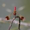 Dragon fly #2 (Go 4 IT) Tags: nature pentax dragonflies holy 365 amateur creations k7 kitlenses heartawards dragonflygallery doubledragonawards dragonflyawards holycreationsofnature kitlenspentax pentaxk7 flickrsgottalent mygearandmepremium mygearandmebronze mygearandmesilver flickrbronzetrophygroup evghenitirulnic
