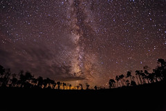 Seeing the Universe Above the Forest (Fort Photo) Tags: longexposure nature silhouette night stars landscape star nikon bravo nightscape space astrophotography astronomy wyoming aspen universe 2010 wy milkyway starscape widefield nikon1735 d700 Astrometrydotnet:id=alpha20100836347035
