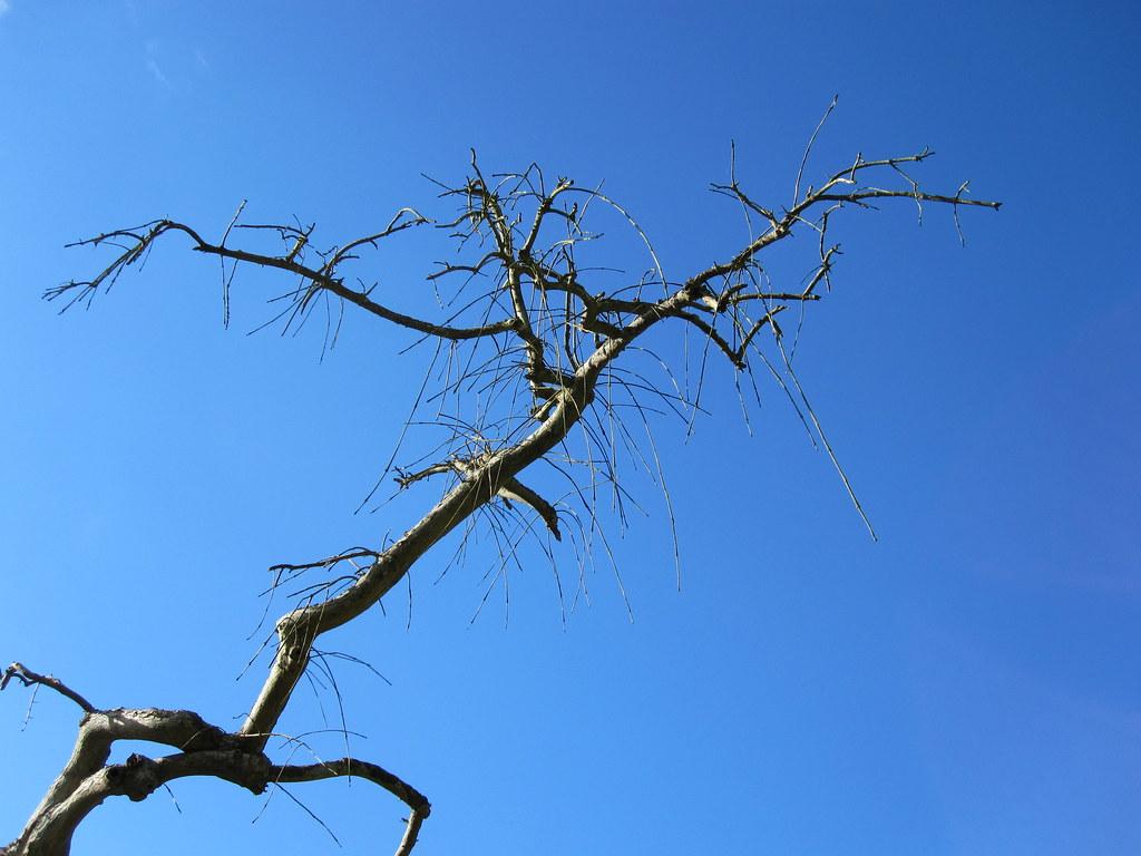 Træ på Vemmetofte Kirkegård