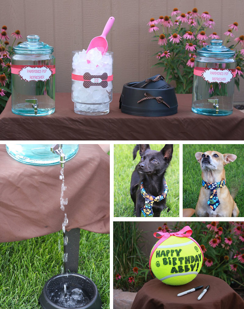 puppy_party5