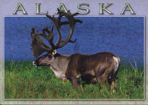 Quentin_Alaska