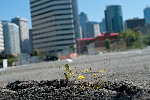 Small Flowers in Empty Lot II