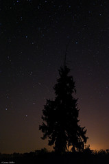 Night sky (.darkchamber.) Tags: longexposure nightphotography tree silhouette pine night stars michigan swifttuttle