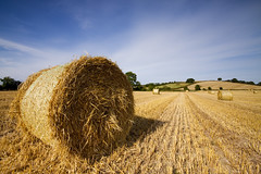 I'm a roller too, honey (Ian Humes) Tags: field sunshine rural landscape geotagged farming tracks sunny bluesky northernireland agriculture bales agricultural countydown arable explored canon50d