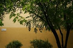 Zuglói borús (sonofsteppe) Tags: life street city morning light summer urban house detail building tree green art leaves sign yellow wall architecture photography 50mm daylight still bush mural scenery hungary mood branch exterior outdoor budapest atmosphere nobody scene architectural foliage explore stray environment series piece visual exploration streetname fragment bough halfmoon lowering sokak leafage streetplate bole milieu hilal cadde wallscape sonofsteppe pusztafia zugló törökőr streetplatesofbudapest urbanlifeoftrees félholdutca