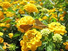 IMG_0247 (Bender Of Light) Tags: flowers light macro canon butterfly photography glenn powershot bender gibbs of glenngibbs benderoflightphotography benderoflight