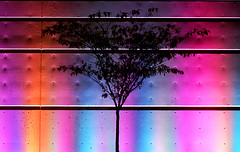 Celebrity Tree (JTContinental) Tags: seattle pink light shadow urban abstract silhouette queenanne vibrant bigmomma thechallengefactory jtcontinental thepinnaclehof tphofweek59