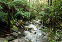 Great Ocean Road 65 (Scott Weatherson) Tags: trees nature water forest river stream australia victoria greatoceanroad lorne surfcoast erskinefalls