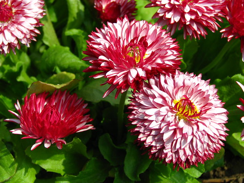 Enkel mooie bloemen
