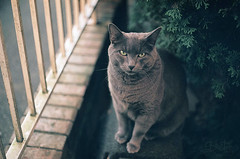 * (Bi0star) Tags: cat fence out intense eyes doors sitting kitty stare railing vancouverfilmphotography35mmyashicafx2