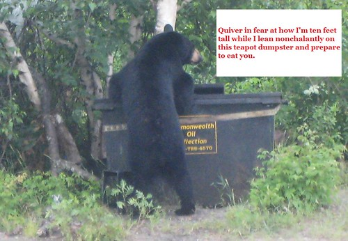 bear chat 4
