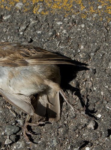 August Sparrow I