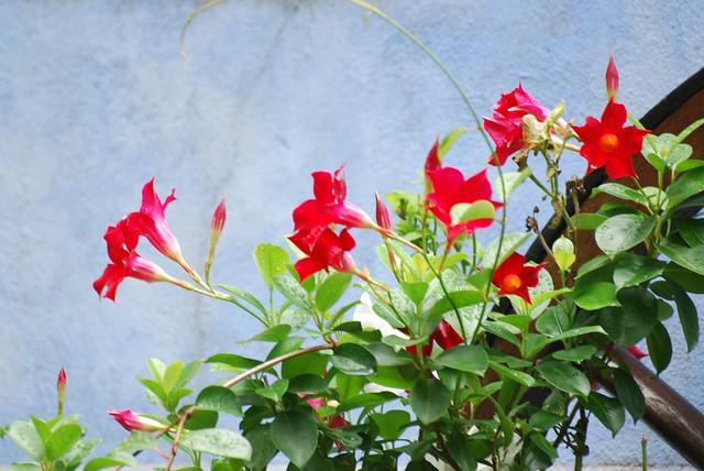 12 - Des fleurs dans la ville, le 18/08/2010 à Besançon