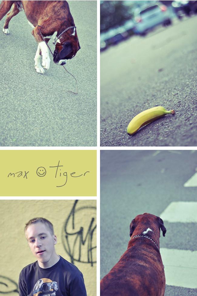 max & tiger