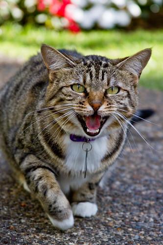 The Cat that Roared