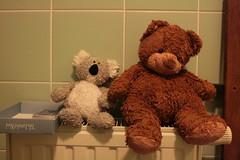 Koala and Bernard the bear drying after bath (jepoirrier) Tags: bear green animal tile toy stuffed fluff plush koala radiator landofnod
