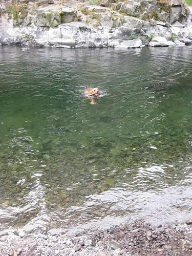 New Swimmer.