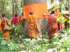 Carbon Covenant - Cambodia: Tree-ordination