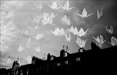 byres road reflections - glasgow (chirgy) Tags: roof sky reflection window birds silhouette skyline clouds scotland origami kodak glasgow flock scan cranes tiles windowdisplay chimneys oxfam olympusxa charityshop flocking bw400cn v500 sothere notadoubleexposure utatafeature art2010